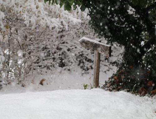 Nevicata autunnale