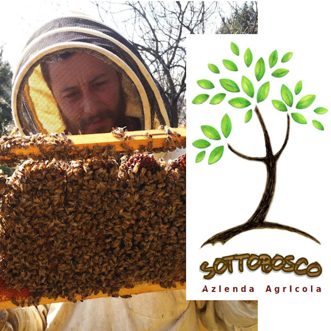 Honey from our region - COLVERDE